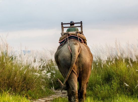 奇旺国家公园,是亚洲最好的观赏野生动物的国家公园之一