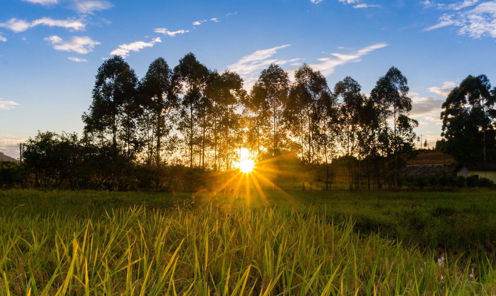 风光摄影:夕阳下的田野