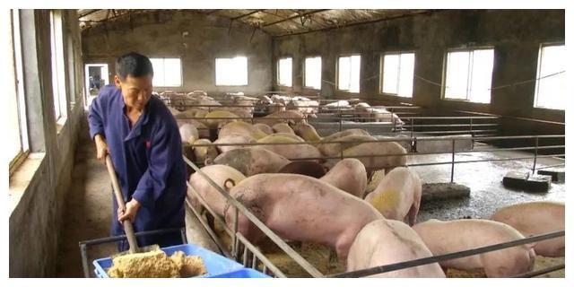 我省多措并举稳定生猪生产,猪肉零售价格环比连续4周下降