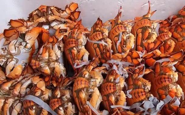 东南亚没人吃的海鲜,被中国游客吃涨价,200一只不愁卖