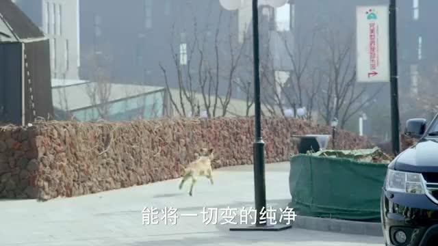 美女临终放不下爱犬,留了一段视频给它,人犬情未了