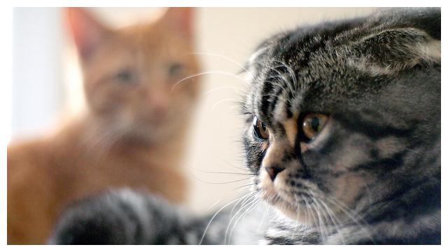 3个小妙招让猫咪冬天也爱上喝水
