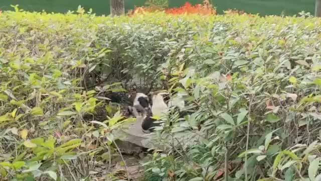 小野狗们尽管吃了上顿没下顿但它们的快乐丝毫没有减少
