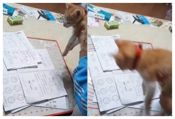 总是粗心错题 小学儿子抱猫绕考卷3圈 隔天真的拿满分