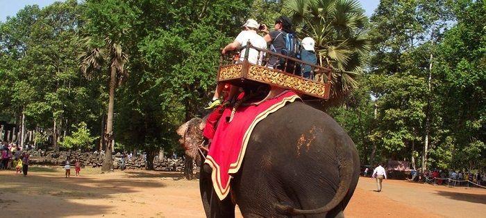 在芭提雅不仅能体验都市夜生活,也能骑大象漫步在原始森林