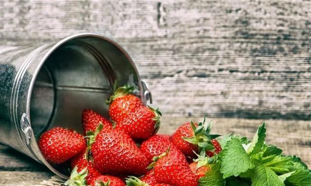 家里阳台种盆草莓,今年冬天就能实现草莓自由