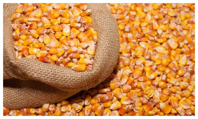 今年我国转基因玉米进口量继续下降 但价格也开始走低