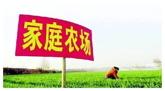"""家庭农场让涉县农民土地里刨出""""金疙瘩"""""""