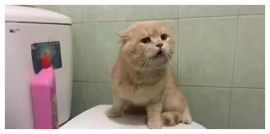 突发洪水淹没家,猫咪为求生蹲马桶上不敢动,看见主人时一脸委屈