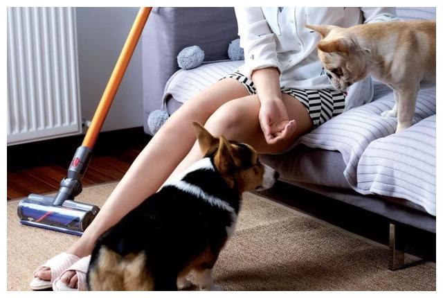 给各位猫奴狗奴支支招:新手饲养员,家庭清洁并非易事