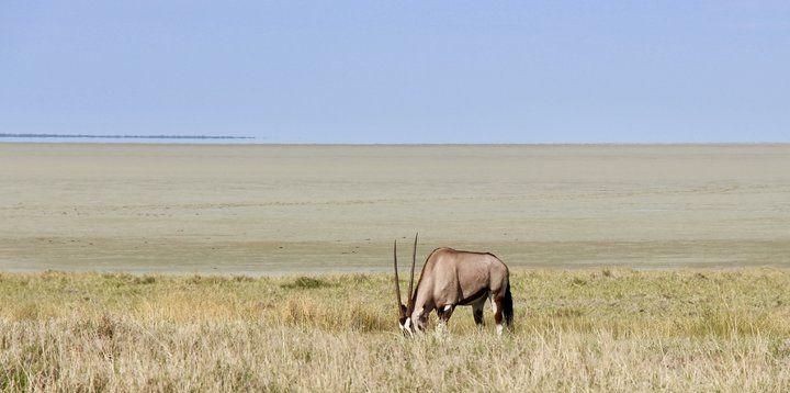 在纳米比亚自己开车找动物!埃托沙国家公园!
