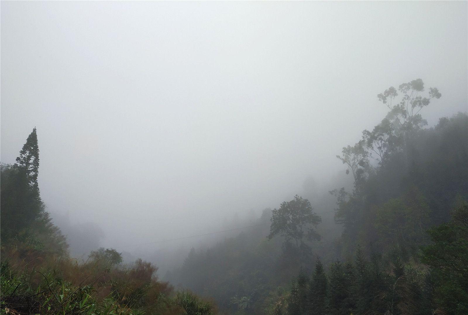 走进烟雨中八排山,一片灰濛濛,这份美景不可言表
