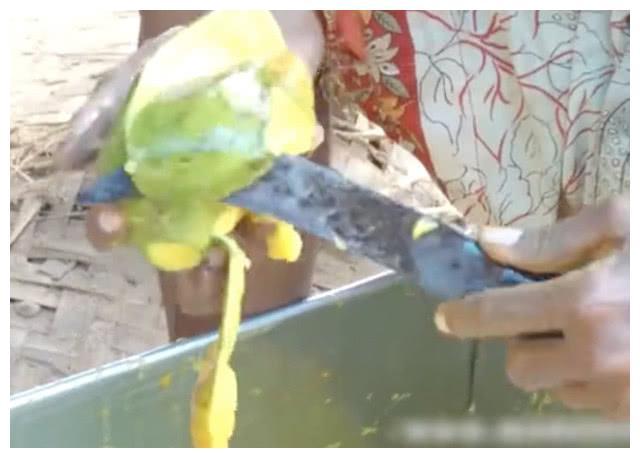 印度的芒果干是这样子制作出来的,看起来不卫生,但绝对纯天然