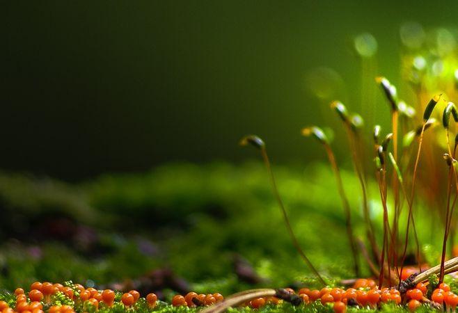 美图:森林中有着各种各样的动植物