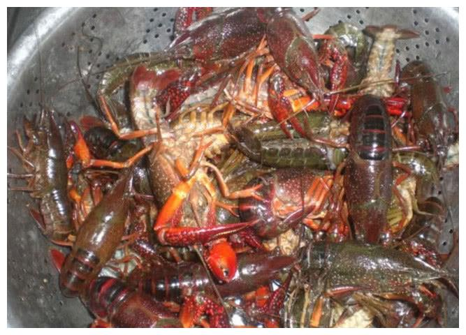 小龙虾要怎么洗才干净?试了试网红的洗法后才发现是如此的坑