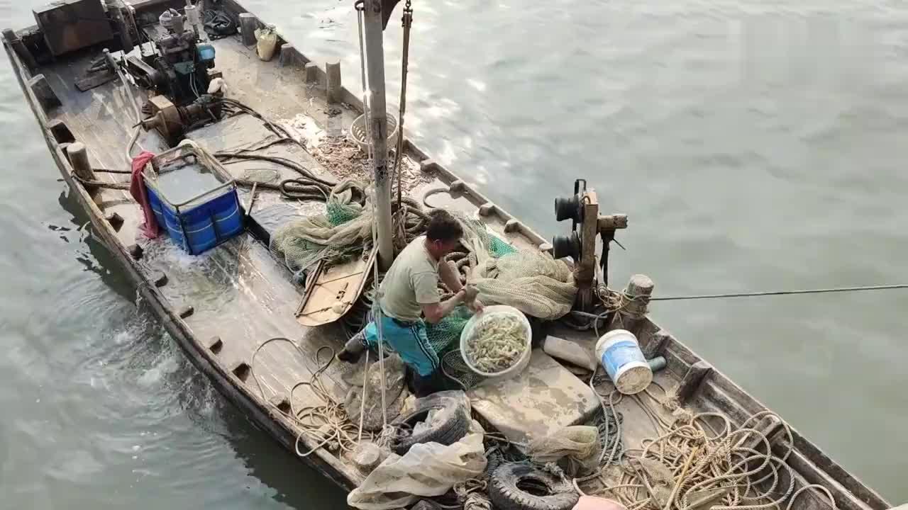 日照海鲜真便宜张家台码头梭子蟹皮皮虾八爪乌贼应有尽有