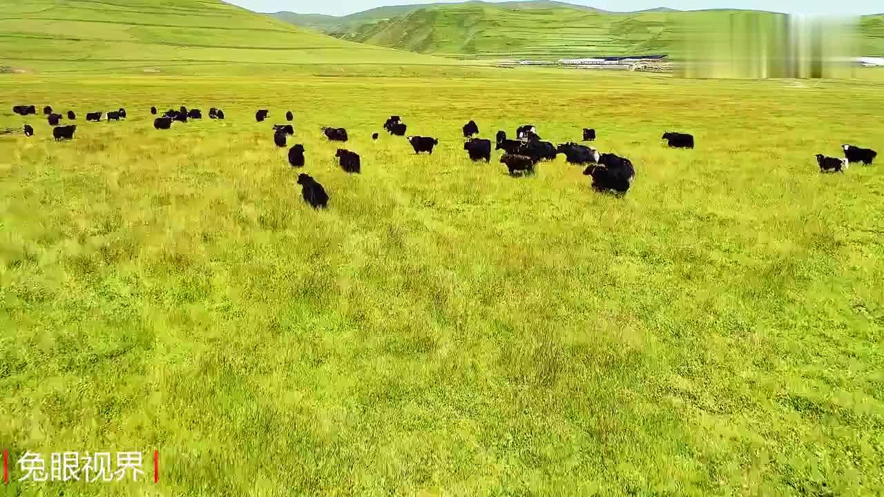 航拍甘肃没想到黄土高原干旱之地也有一片水草丰茂草原