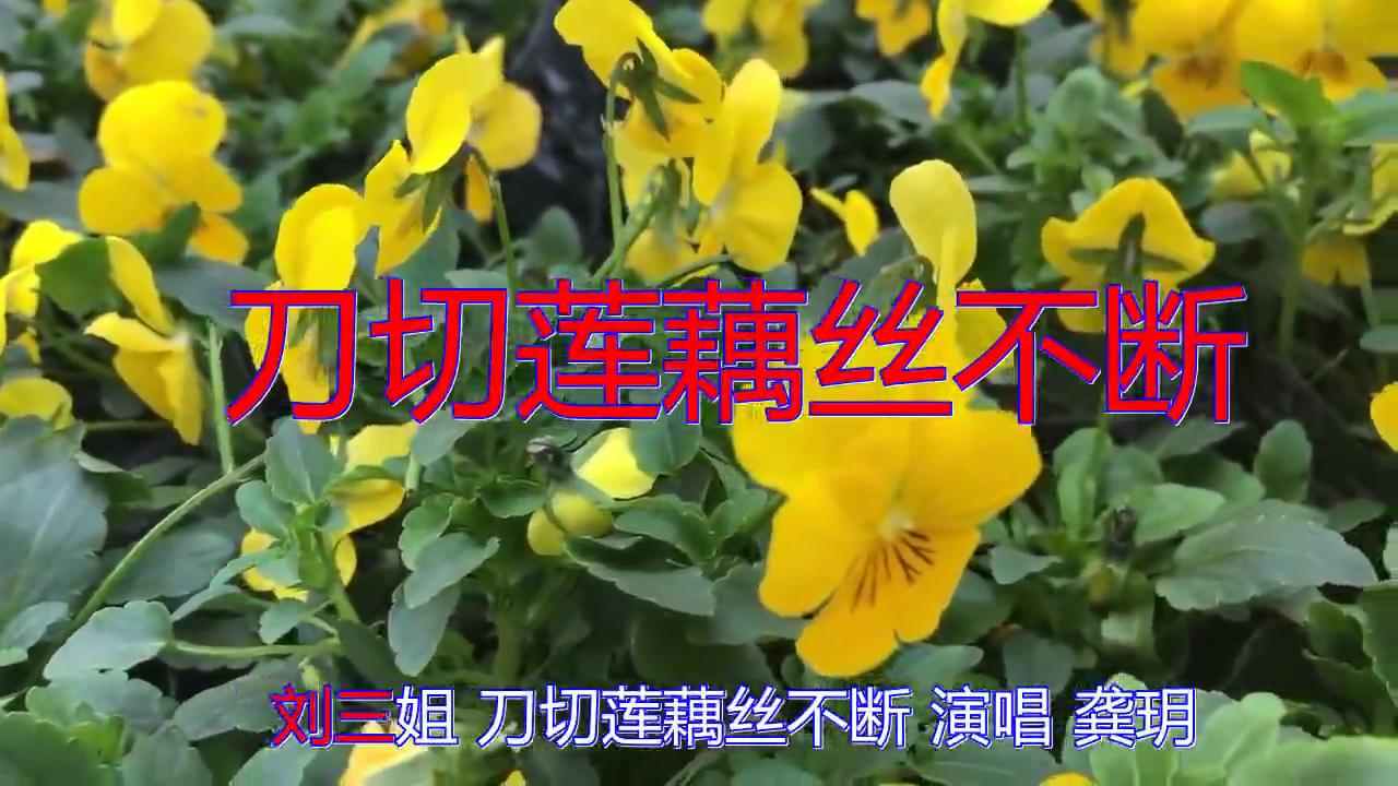 分享龚玥的经典歌曲《刀切莲藕丝不断》,感心动耳,歌声热情似火