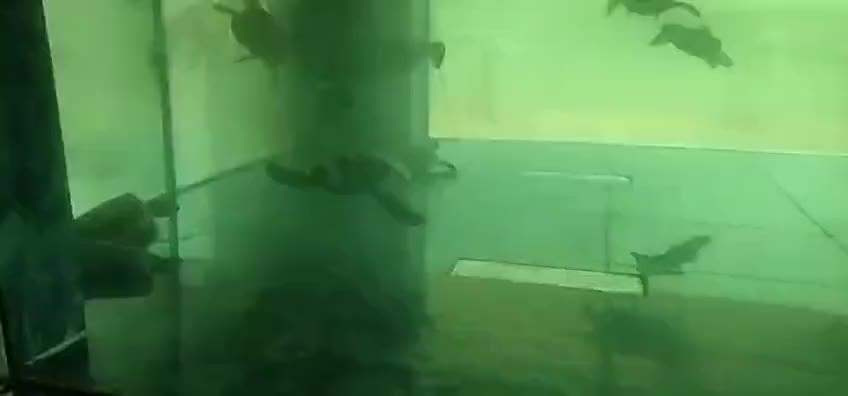 该抓!收购野生绿海龟养进农场水族箱,中山男子被刑拘