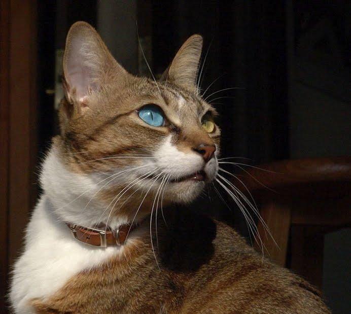 骄傲的猫咪拥有丰富细腻的情感,难怪自愿当铲屎官,简直被萌化了