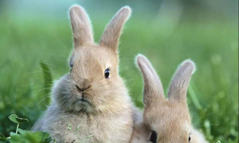 """大金兔:恐怕要出""""天塌""""的大事,就在1月,时刻准备着"""