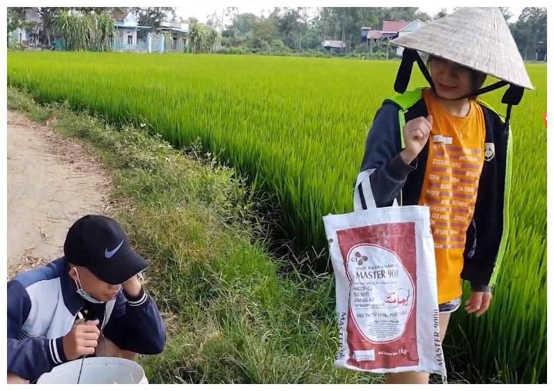越南的田螺真多,小姐姐提着一个桶出去,满载而归,网友:赚大了
