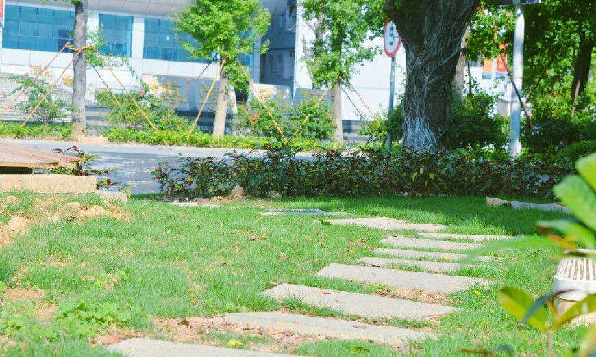广西医科大学的小角落