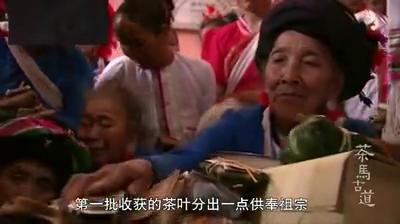 路因茶而生,布朗族的女人收获的茶叶分出供奉祖宗