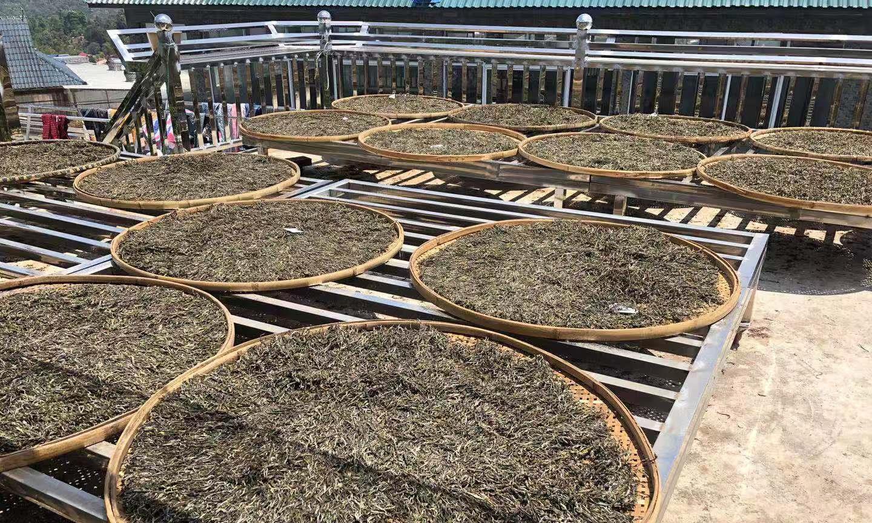 老班章普洱茶历年毛料收购价格,19年翻了1750倍