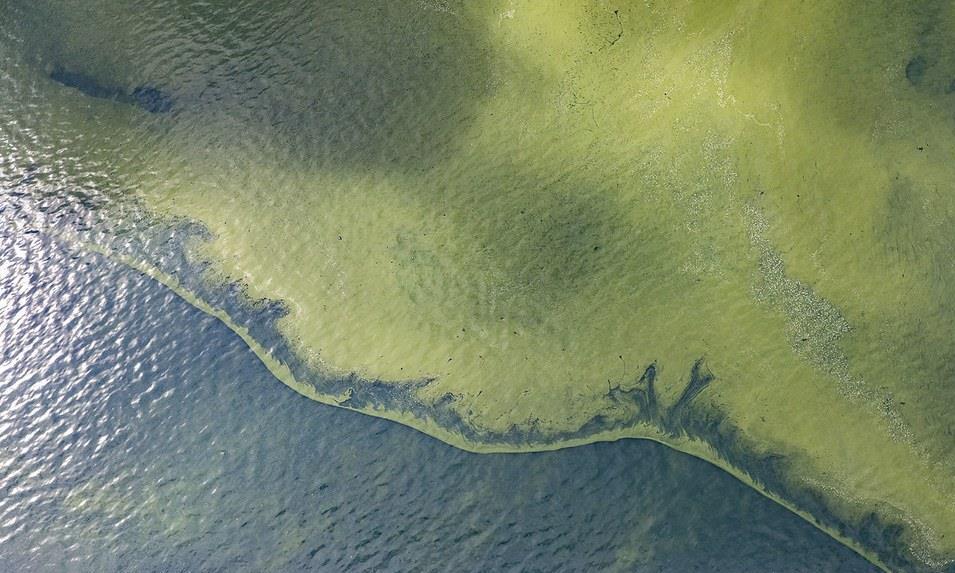 加热微生物汤:温暖的海洋可能会使蓝细菌变有益
