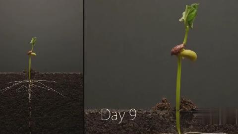 牛人拍摄25天,记录大豆生根发芽全过程,自然的力量太强大了