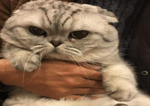 猫咪最讨厌的3种拥抱方式,不仅让它感觉痛苦,而且还会抓伤你!