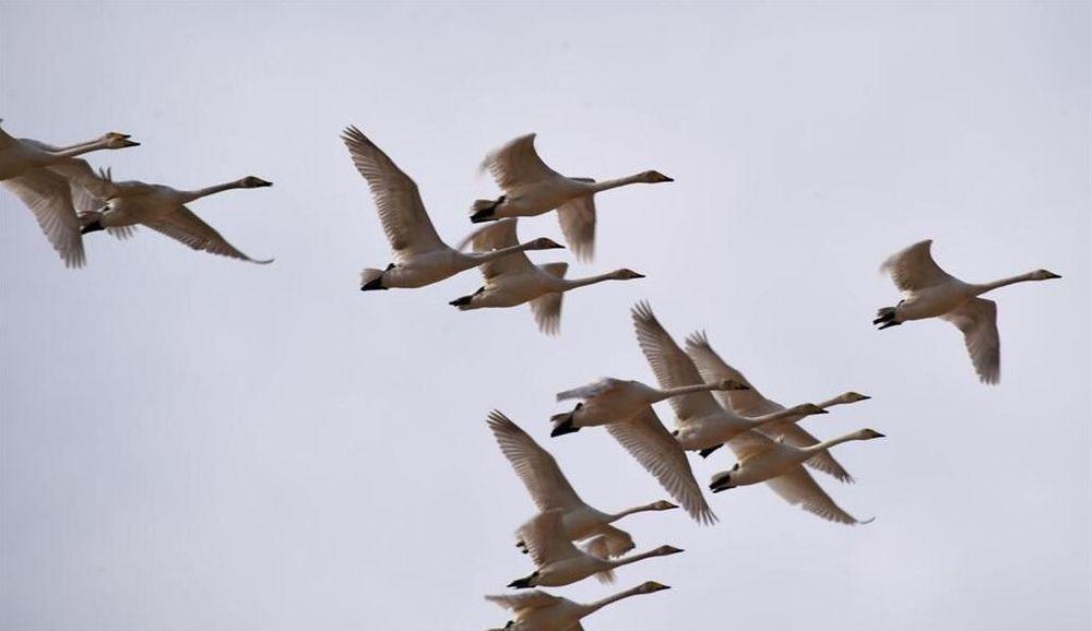 肃北盐池湾国家级自然保护区,是今年4月国务院批准成立的