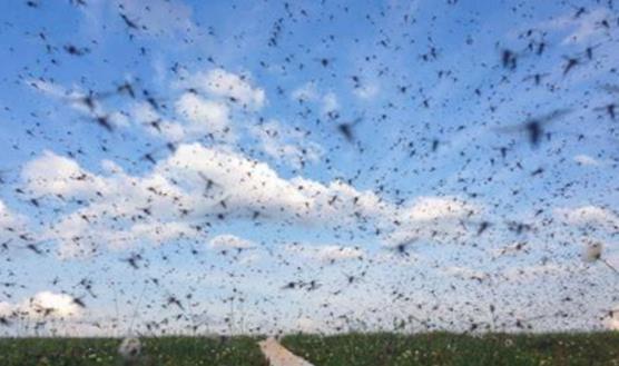 卑劣却坚韧的掠食者——在环境严苛的北极圈成群结队的蚊子