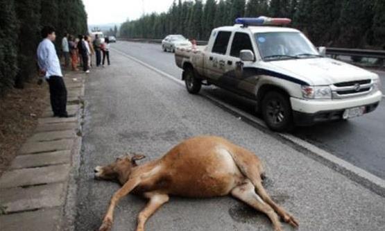 高速公路上突遇障碍物,是撞上去还是躲开?选错了后果相当严重!