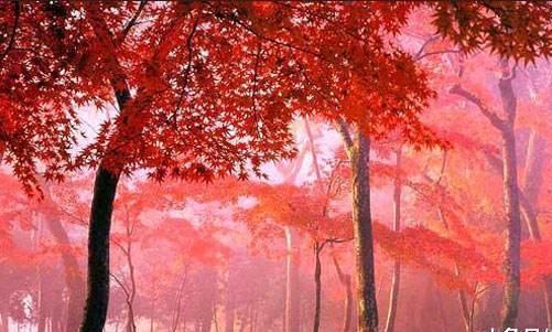 """我国面积最大""""枫叶景区"""",比香山大180倍,枫叶最好的地方之一"""