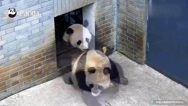 熊猫:对小鸟充满吸引力的到底是你,还是你手里的窝窝头