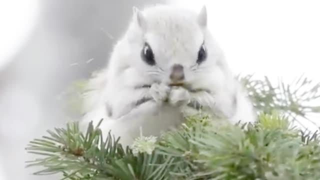 还有这种毛色的松鼠?太可爱了,松鼠:今天咱吃顿好的!