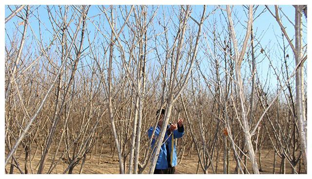 退耕还林,就是农村耕地不种庄稼却种树?耕地上种树违法吗?