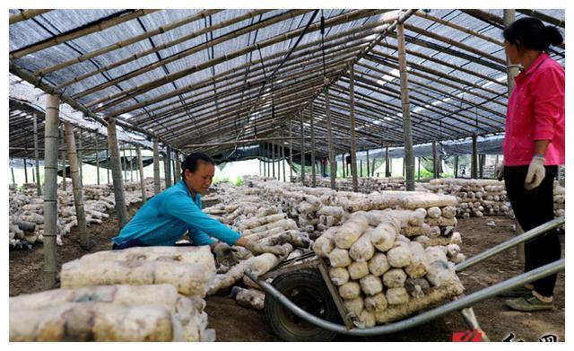 四川认定9家重点贫困农场退出贫困