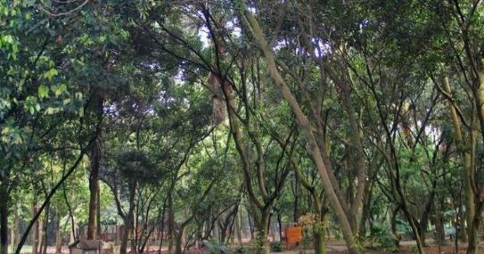 南宁良凤江国家森林公园:华南地区最大的珍稀树木标本园