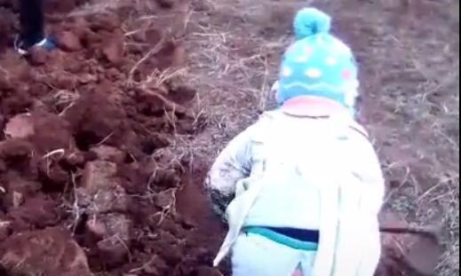 3岁女童干活动作熟练,用锄头刨地有模有样的,网友直呼厉害