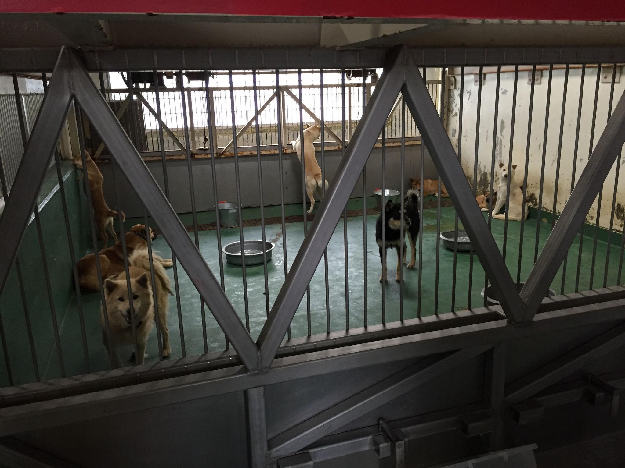 """实拍日本宠物收容所,高级的设施,却是流浪狗的""""地狱"""""""