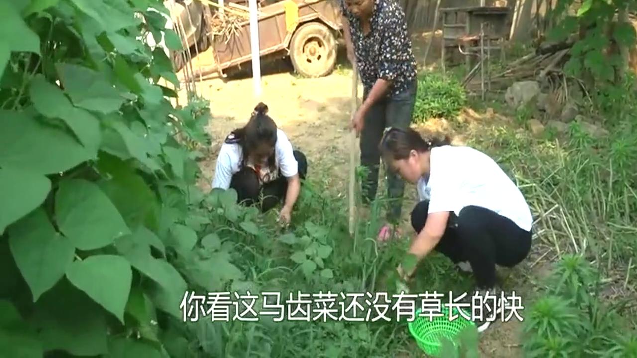 农村婆媳小院挖野菜,儿媳挖个黑瓷罐,婆婆让扔掉儿媳当成宝