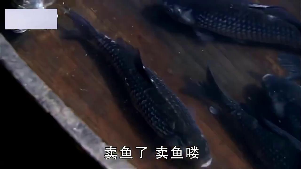 聊斋新编 :美女为省下一文钱,竟说死鱼是刚闭上眼的鲜鱼