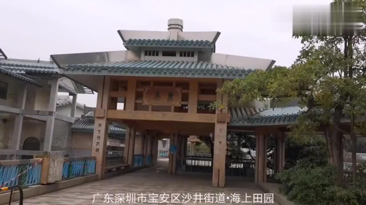 广东深圳海上田园小哥登上望海楼顶层周周美景尽在眼底
