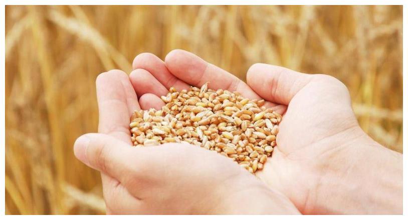 小麦酿酒流程, 特点: 后劲十足! 快学起来