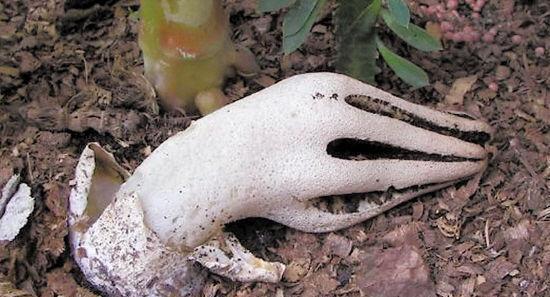 6种世界上最吓人的植物,图一像是人类的手,图四竟然像眼珠子!
