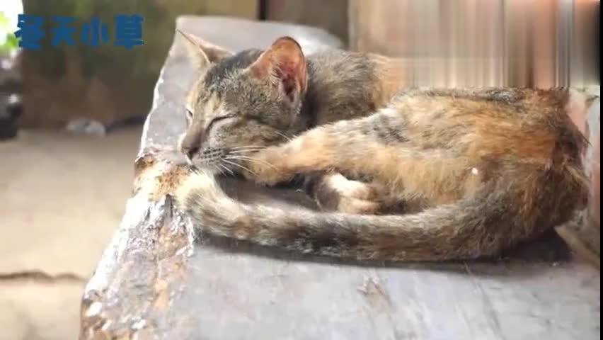 可怜流浪猫蜷缩在长椅上饿到皮包骨得到食物瞬间惊醒