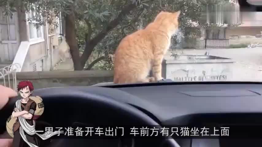 猫咪看见车里有一只松鼠顿时就被吸引了这是个什么东西